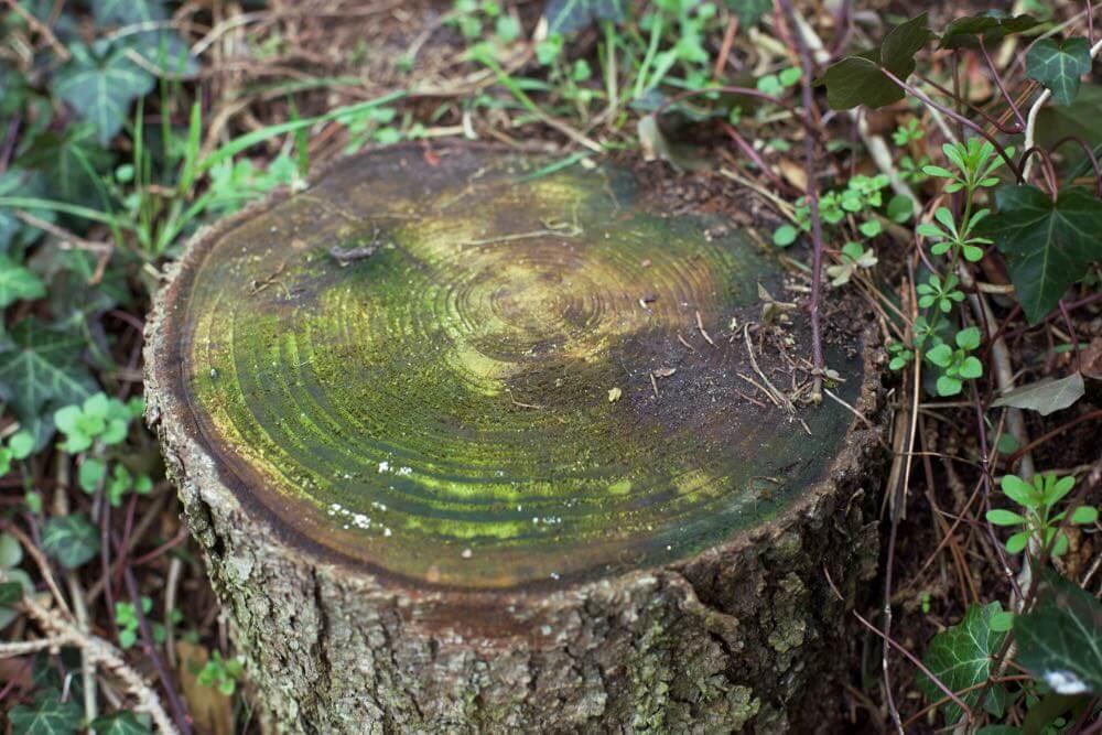 Baumstumpf Verrotten Lassen