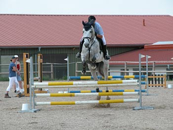 Das Pferd ist im Flug eingefangen - (Foto: Martin Goldmann)