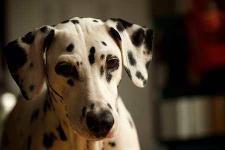Hundefoto - (Foto: Martin Goldmann)