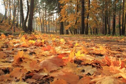Laub auf dem Boden - (Foto: iStockphoto/Ulrike Neumann)