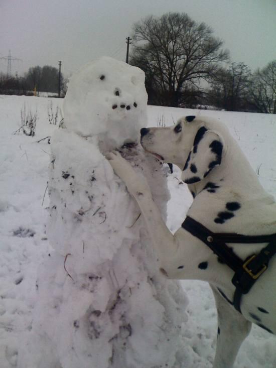 Hund Frisst Tapete An Was Tun : Hund im Schnee an einem Schneemann mit Leckerli ? (Foto: Martin