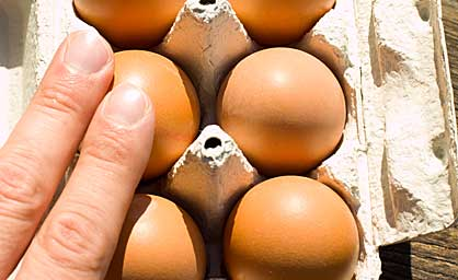 Eier testen indem man sie mit der Hand vorsichtig bewegt