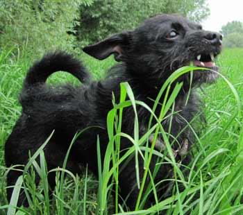 Hund in Wiese - (Foto: Martin Goldmann)