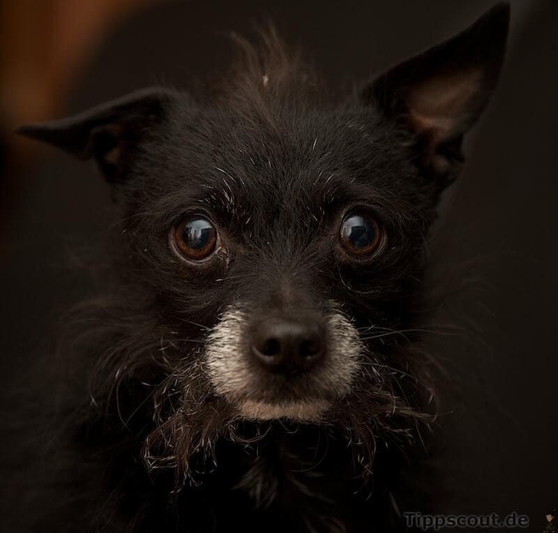 chico blitz - (Foto: Martin Goldmann)