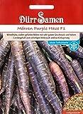 Möhren, Purple Haze F1, Daucas carota, Saatgut, Samen