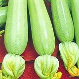 weiße Zucchini'Long White Bush' 20 x Samen aus Portugal 100% Natur/Massenträger ideal zum Grillen...