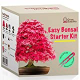 Züchte dein eigenes Bonsai - Züchte einfach 4 Arten von Bonsai-Bäumen mit unserem kompletten,...