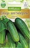 Chrestensen Einlege- und Salatgurke 'Delikateß'
