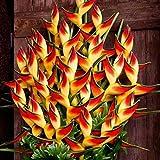 Beautytalk-Garten Raritäten Sperlings Blumen Mucuna Birdwoodiana Blumensamen mehrjährig Blumen...