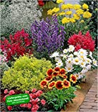BALDUR-Garten Bunter Staudengarten, Staudenbeet, Stauden Sortiment 9 Pflanzen rote Astilbe, weißes...