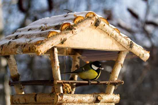 Vögel füttern im Vogelhäuschen - (Foto: iStockphoto/Milous)