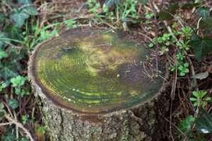 Baumstumpf in Garten