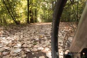 Mit dem Rad in den Wald. Das schafft nicht nur frische Luft, sondern auch viel Bewegung.