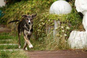 Hund kommt - (Foto: Martin Goldmann)