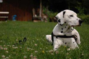 Hund macht Platz - (Foto: Martin Goldmann)