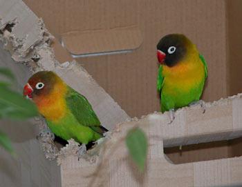 Vögel lieben es Pappe zu knabbern - (Foto: Martin Goldmann)