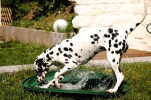 Hund spielt mit Wasser - (Foto: Martin Goldmann)