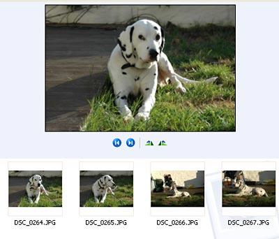 Ein Hund in der Bildervorschau von Windows XP