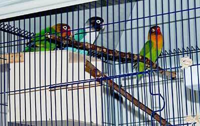 Vögel sind gelegentlich ziemlich laut - (Foto: Martin Goldmann)