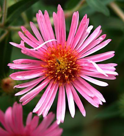 Eine hübsche Blüte aus dem Garten