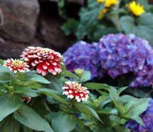 Blumen in mehreren Farben