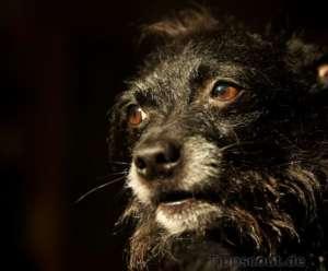 Chico schon größer - (Foto: Martin Goldmann)