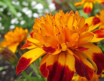 Makroaufnahme Blume - (Foto: Markus Schraudolph)