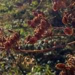 Abgestorbene Pflanzen