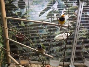 vögel transportieren