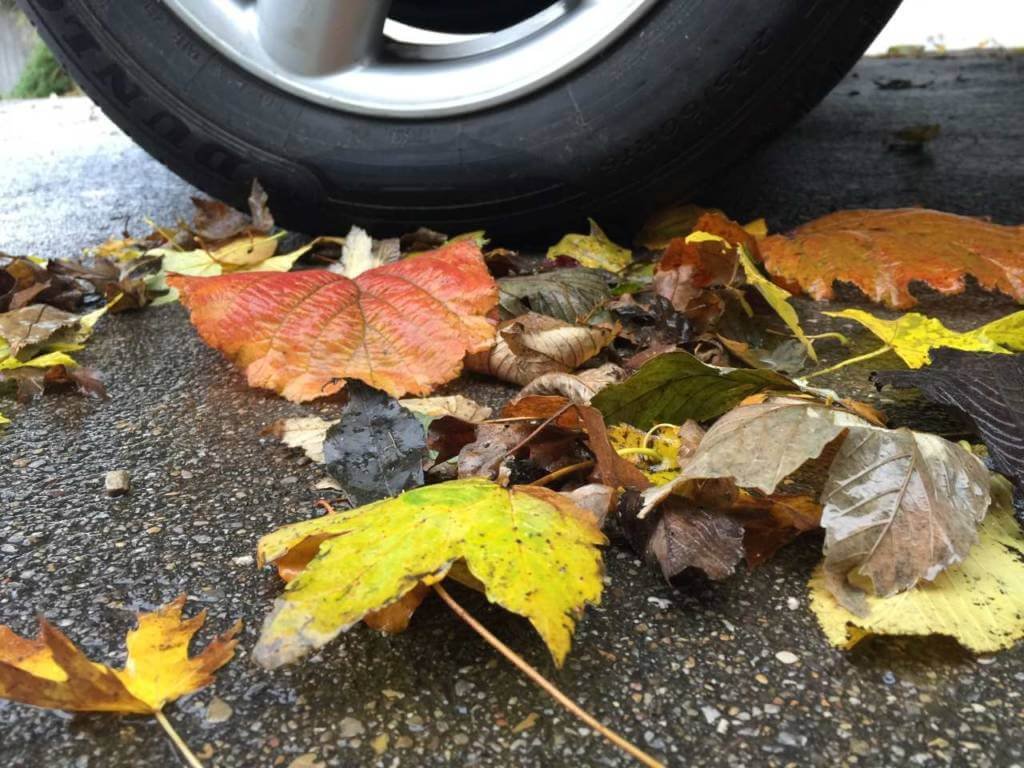 Blätter mit Reifen