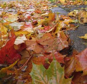 Der Winter naht, Blätter auf der Fahrbahn lassen das Auto jetzt schnell wegrutschen - (Foto: Markus Schraudolph)