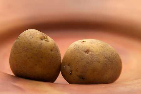 Kartoffeln: Wichtiges und leckeres Gemüse - (Foto: Martin Goldmann)