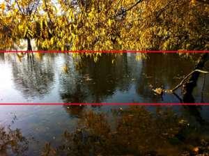 Baum mit gelben Blättern an Flussufer - (Foto: Martin Goldmann)
