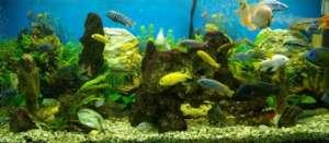 Aquarium kaufen: Fische in einem Aquarium - (Foto: iStockphoto/Dmitry Demidovich)