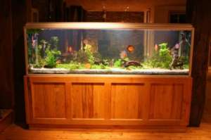 Großes Aquarium in einem Zimmer - (Foto: iStockphoto/paul prescott)