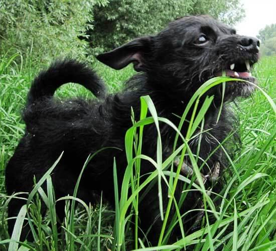 Kleiner schwarzer Hund im Gras - (Foto: Martin Goldmann)