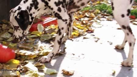 Hund mit Futterpyramide - (Foto: Martin Goldmann)