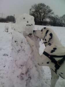 Hund im Schnee an einem Schneemann mit Leckerli - (Foto: Martin Goldmann)