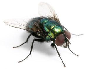 Fliege - (Foto: iStockphoto/Antagain)