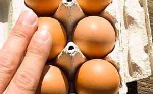 Eier prüfen auf Risse in der Schale