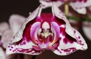 Orchideenbluete - (Foto: Martin Goldmann)