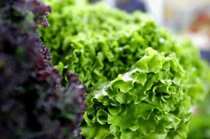 Salat aus dem Garten - (Foto: iStockphoto/Alena Yakusheva)
