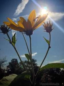 Blume mit dem iPhone 5 fotografiert - (Foto: Martin Goldmann)