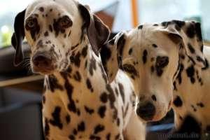 Beim Hunde fotografieren auf Augenhöhe oder tiefer gehen.