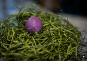 Lila Ei in Nest - (Foto: Martin Goldmann)
