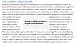 Word: Textfeld ohne Rahmen